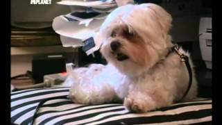 Переводчик с собачьего (сезон 1 серия 01 из 26 2004)