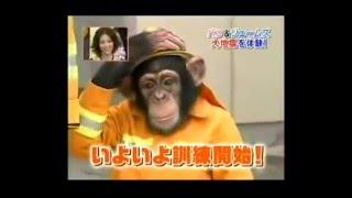 Милая обезьяна с собакой пробуются в пожарные