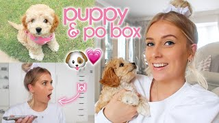 THE FIRST PUPPY VLOG 😍 lockdown vlog #11