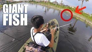 Buy Lifetime Tamarack 10' Angler Kayak, Olive Green, 90818