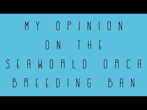 My Opinion on the SeaWorld Orca Breeding Ban