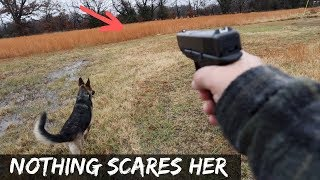 fearless-german-shepherd-saved-my-chickens-from-stray-dog-attack
