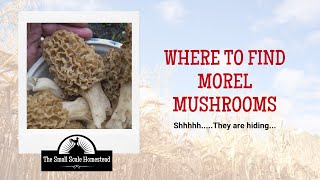 Where to Find Morel Mushrooms