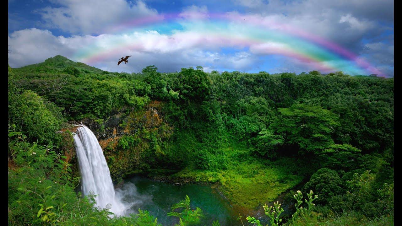 the garden island kauai hawaii 2016 - The Garden Island