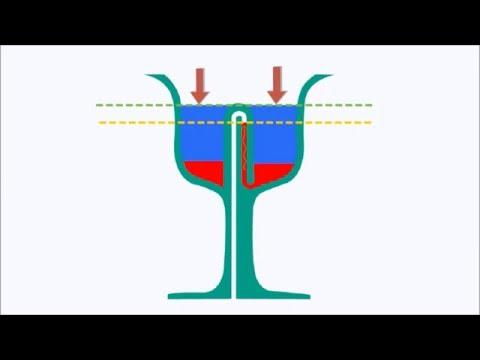 Pythagoras Cup: Working and Principle