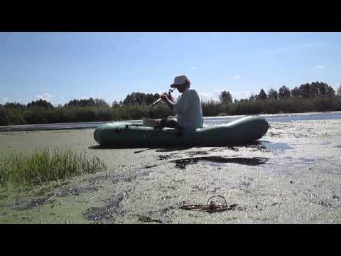Ряска — свойства и лечение растением ряска болотная