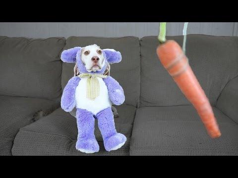 Bunny Dog vs Floating Veggies: Cute Dog Maymo