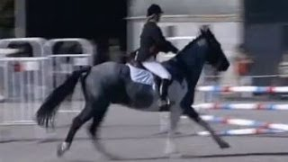 Equitation : Galop 6 - Cheval