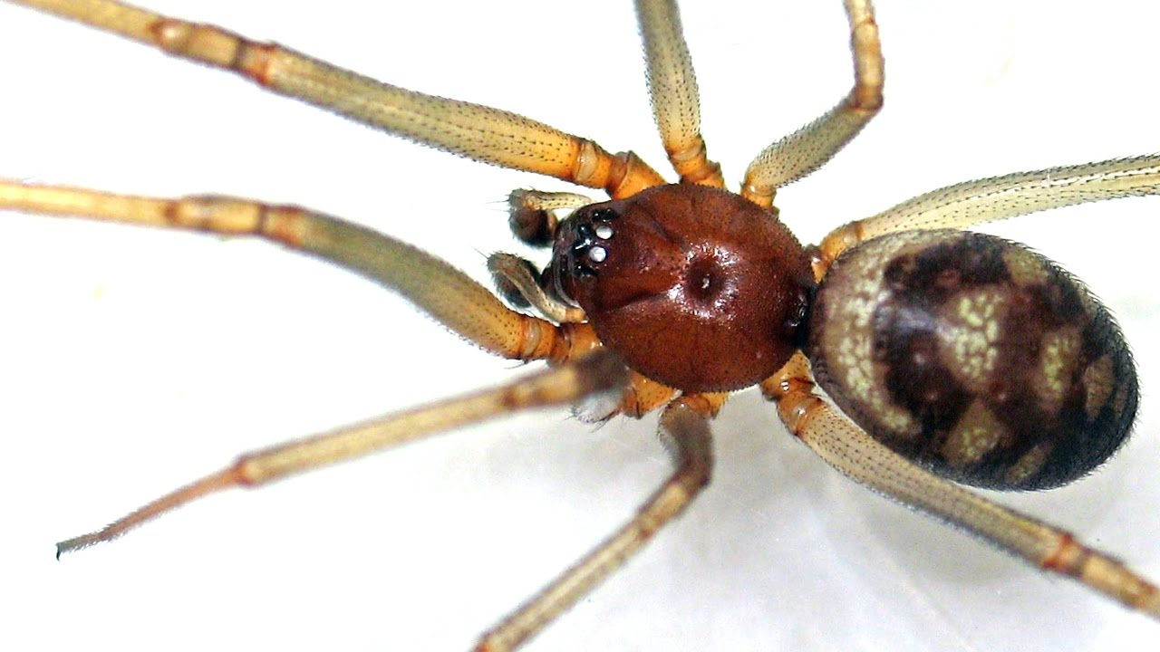 Ядовитые пауки (Poisonous spiders) - YouTube