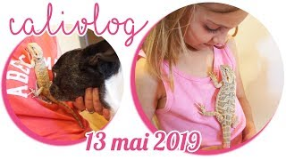 [NYCYLA CALIVLOG] ON ADOPTE UN DRAGON 🐲