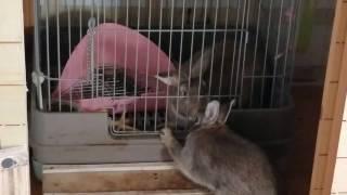 【関連動画】 ・なめたら、猫パンチ! https://www.youtube.com/watch?v...
