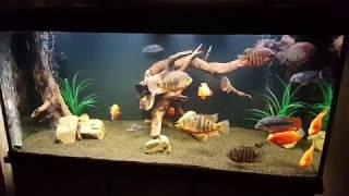 интерактивный аквариумный туризм сезон 3 выпуск 29 поговорим о центральной америке