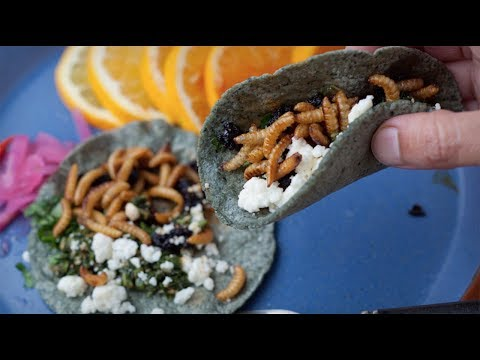 Bugs for Breakfast | California Academy of Sciences