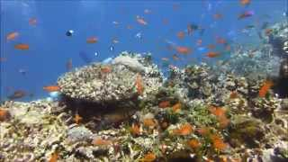 We love diving in the Maldives 1