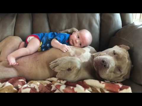 Baby Lays on Dog