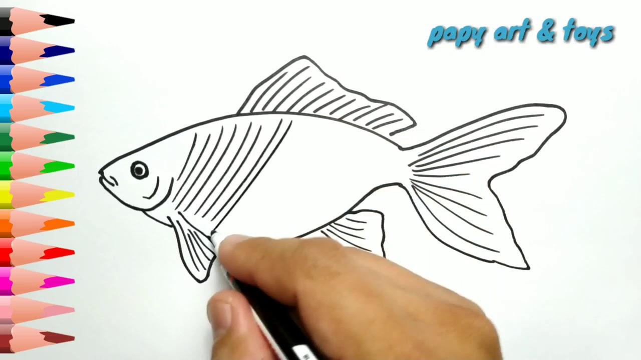 AJAIB Belajar Cara Menggambar IKAN Mewarnai Kartun Dengan Mudah Anak Indonesia Menggambar