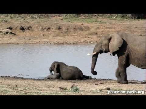 Intimate Bond - An Elephant Family in Kruger National Park, S. Africa