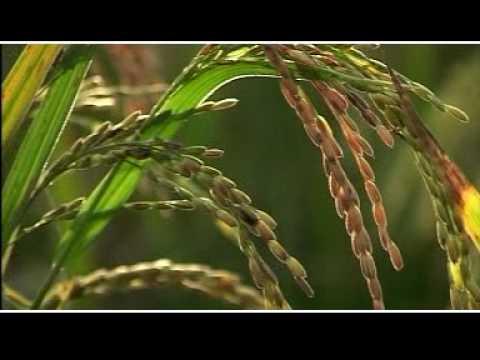 Malayalam Christian Songs-- Chiler ninakkumbole...........