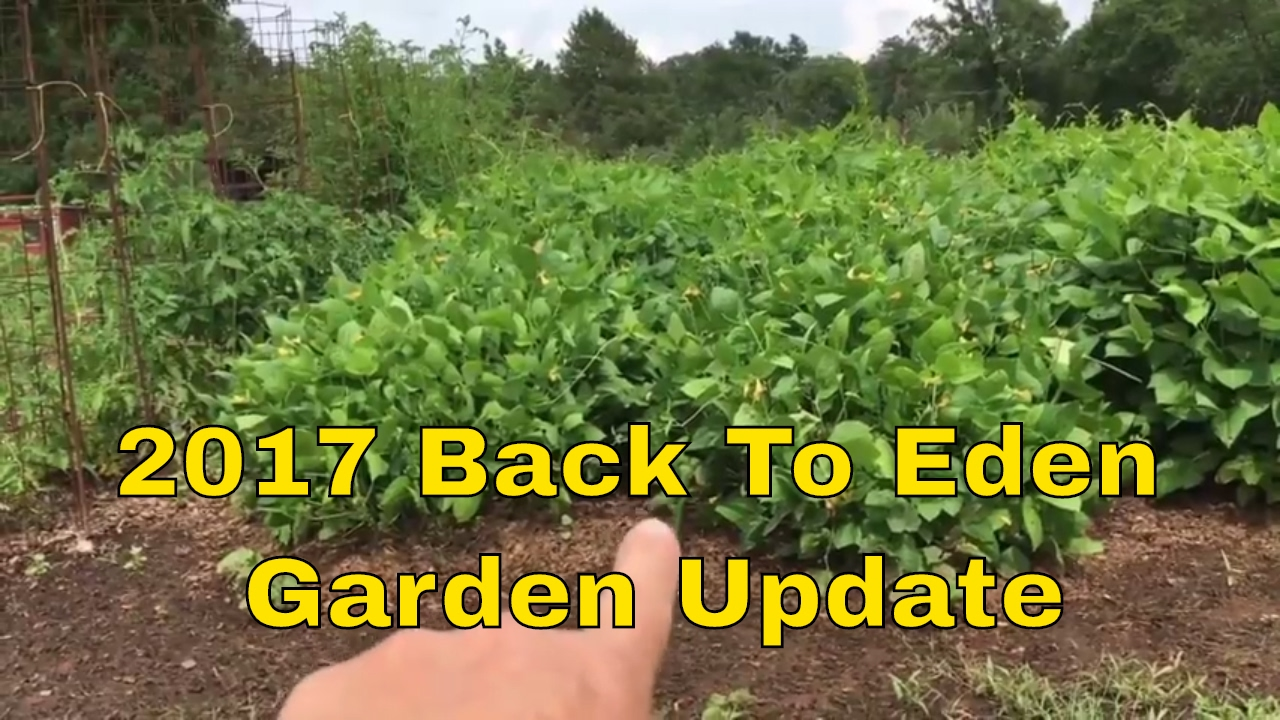 2017 back to eden garden update ~ wow ! - youtube