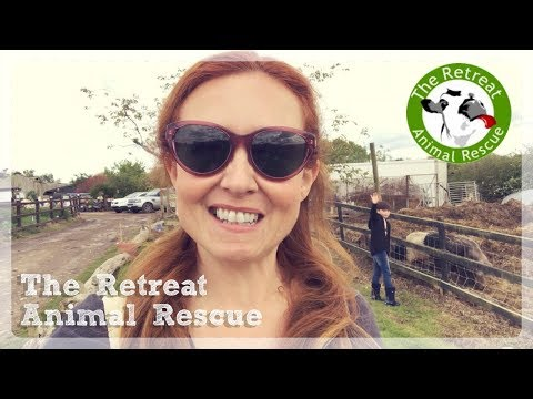 The Retreat Animal Rescue ☀️ A Vegan Day Out 🐄 Vlog