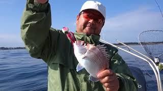 室園会様 海のお魚さんプルンプルン! thumbnail