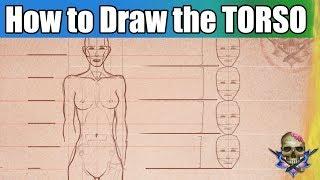 How to Draw the TORSO Art Tutorial Anatomy