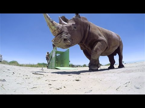 GoPro BTS: The Last of the Rhinos - Inside the VR Shoot