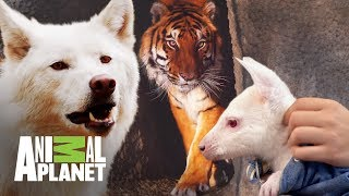 Los animales más sorprendentes de Dr. Jeff | Dr. Jeff, Veterinario | Animal Planet