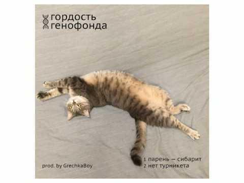 Гордость Генофонда - Парень - Сибарит