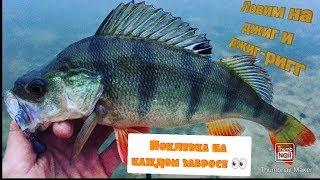 Окунь клюет на каждом забросе / Щука режет поводки / Ловля рыбы на Джиг-ригг.