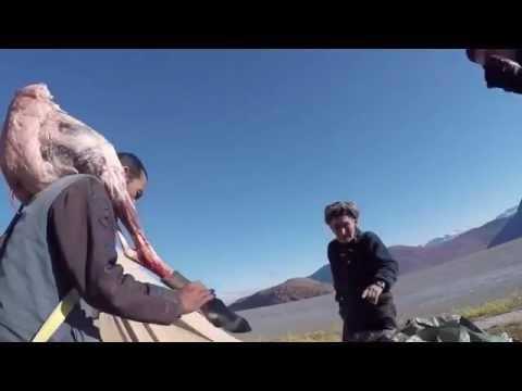 Reindeer hunting in Greenland - Aavarneq - Rensdyrjagt