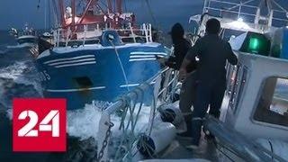 Гребешки раздора: английские и французские рыбаки ведут настоящую морскую войну - Россия 24