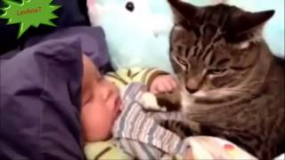 Смешное видео животные и дети Funny video animals and children