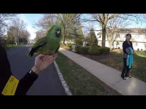 Official video of Dino the talking Parrot loves his neighbors