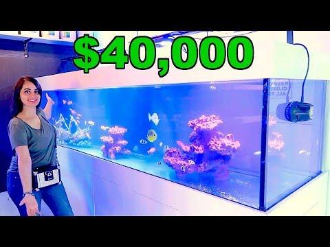 MY NEW $40,000 FISH TANK !!!