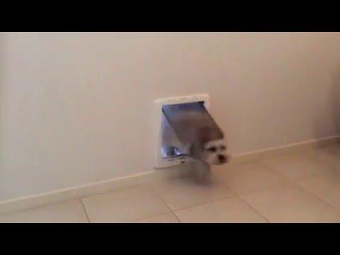 Medium Dog Door Installed In A Wall By Pet Doors Australia Youtube