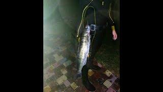 Подводная Охота Осень 2019 (Встретил  Крупного Судака)