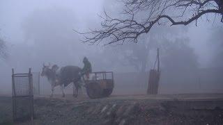 Vrindavan 2014 mist