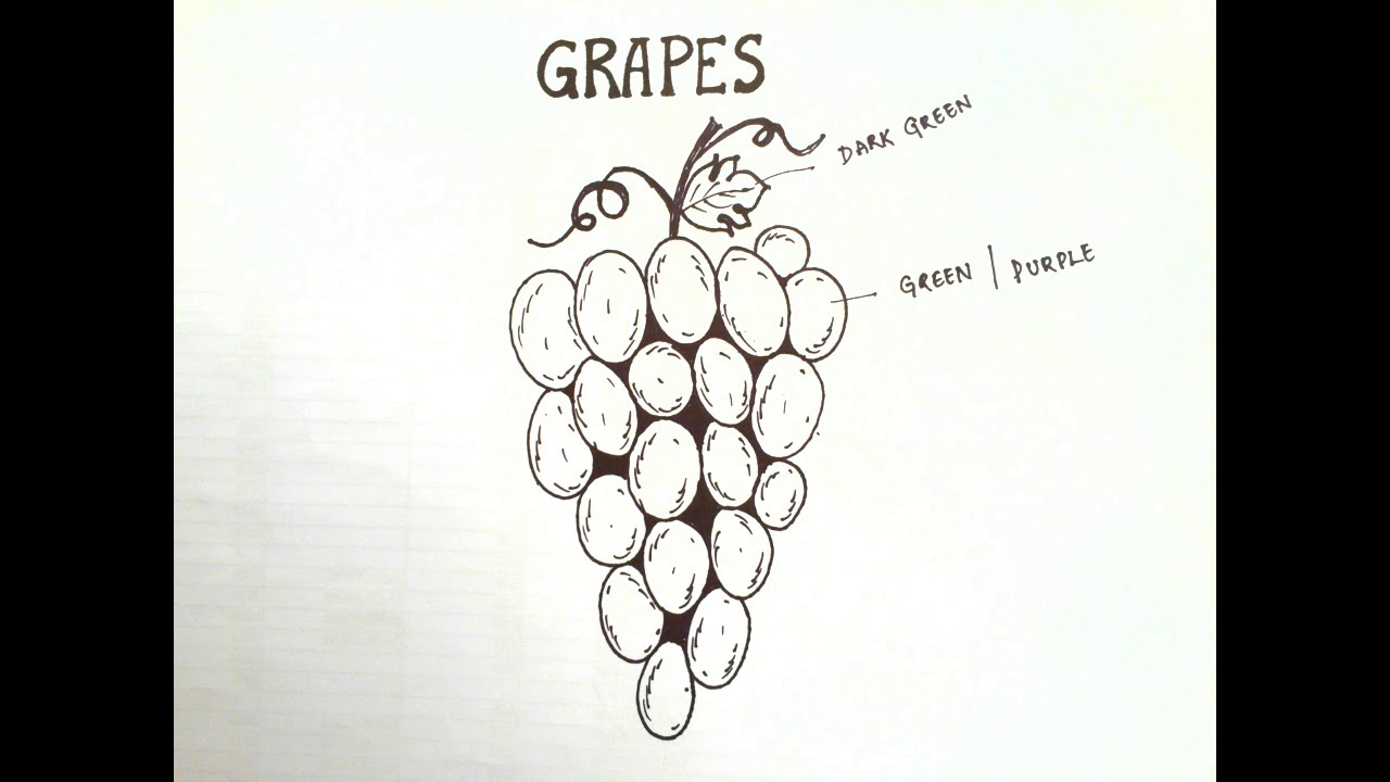 Draw easy How to draw grapes - YouTube for drawing grapes easy  199fiz