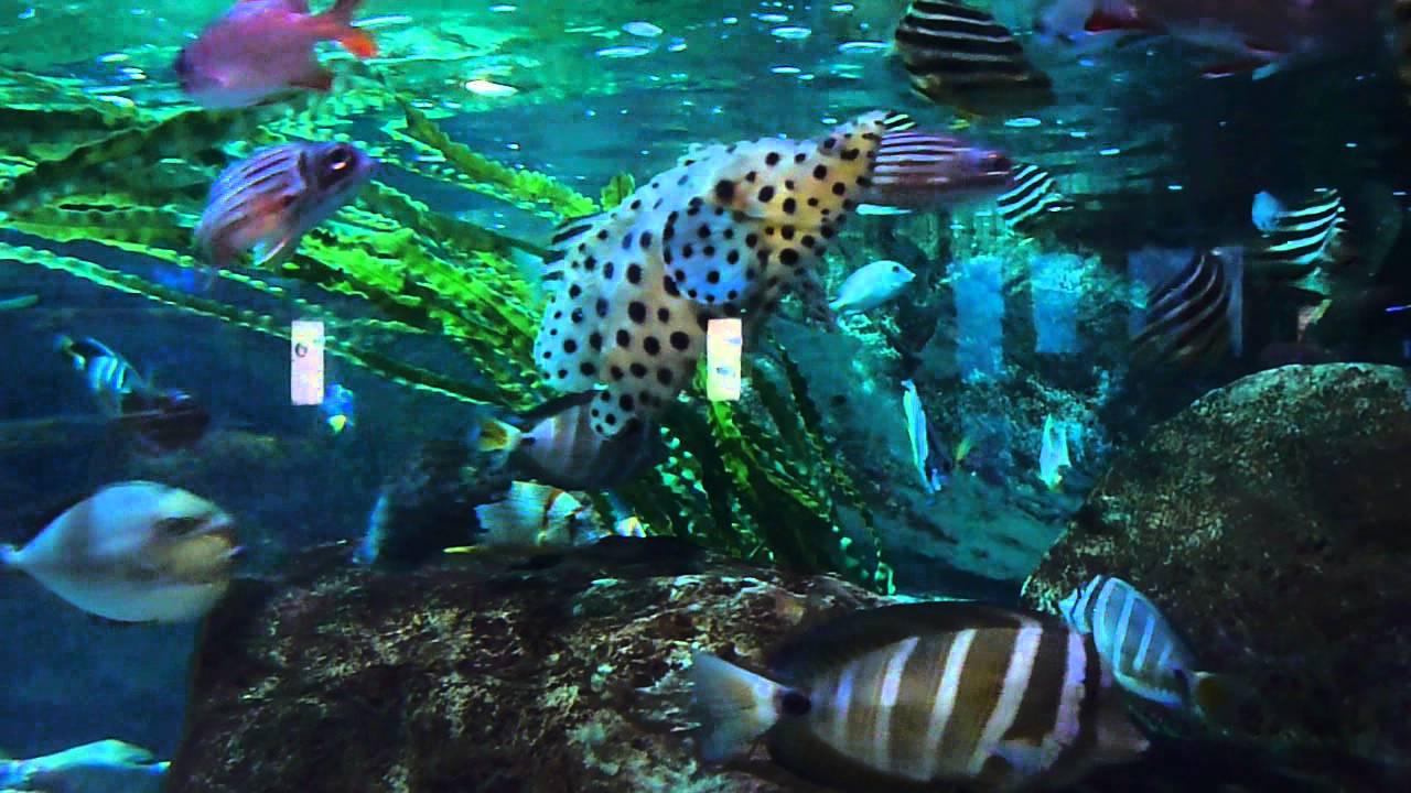 Busan Aquarium, South Korea (Fish 2) - YouTube