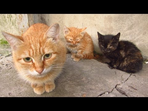 Mother cat hisses and the kittens are afraid of me