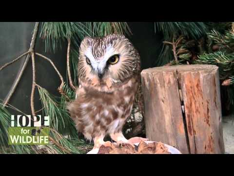 Help Hope for Wildlife Raise the Roof For Wildlife!