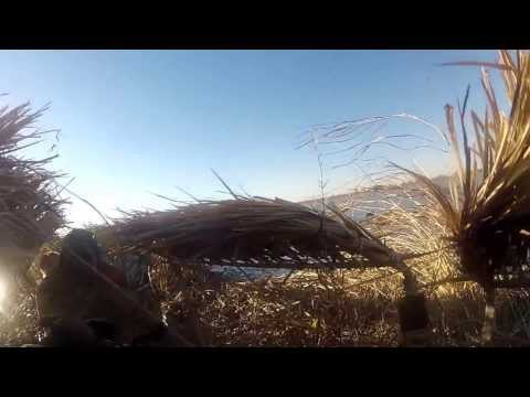 Goose hunting 12-4 in Nelson, CA