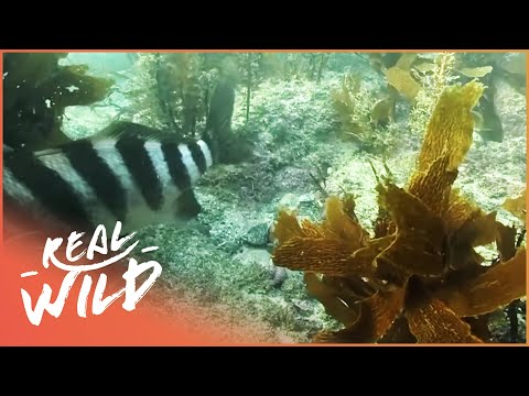 Under The New Zealand Sea [Wild Coast Documentary] | Wild Things
