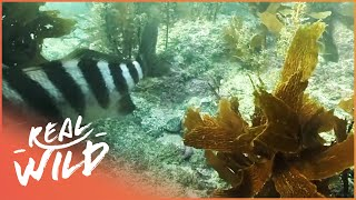 What's Under The New Zealand Sea? | Wild Coasts | Wild Things Documentary