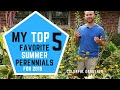 My Top 5 Favorite Summer Perennials for 2018 🌼👍🏻 / Colorful Gardener