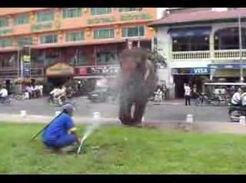 Washing the elephant, downtown Phnom Penh