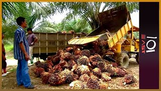 101 East - Indonesia: The Price of Palm Oil
