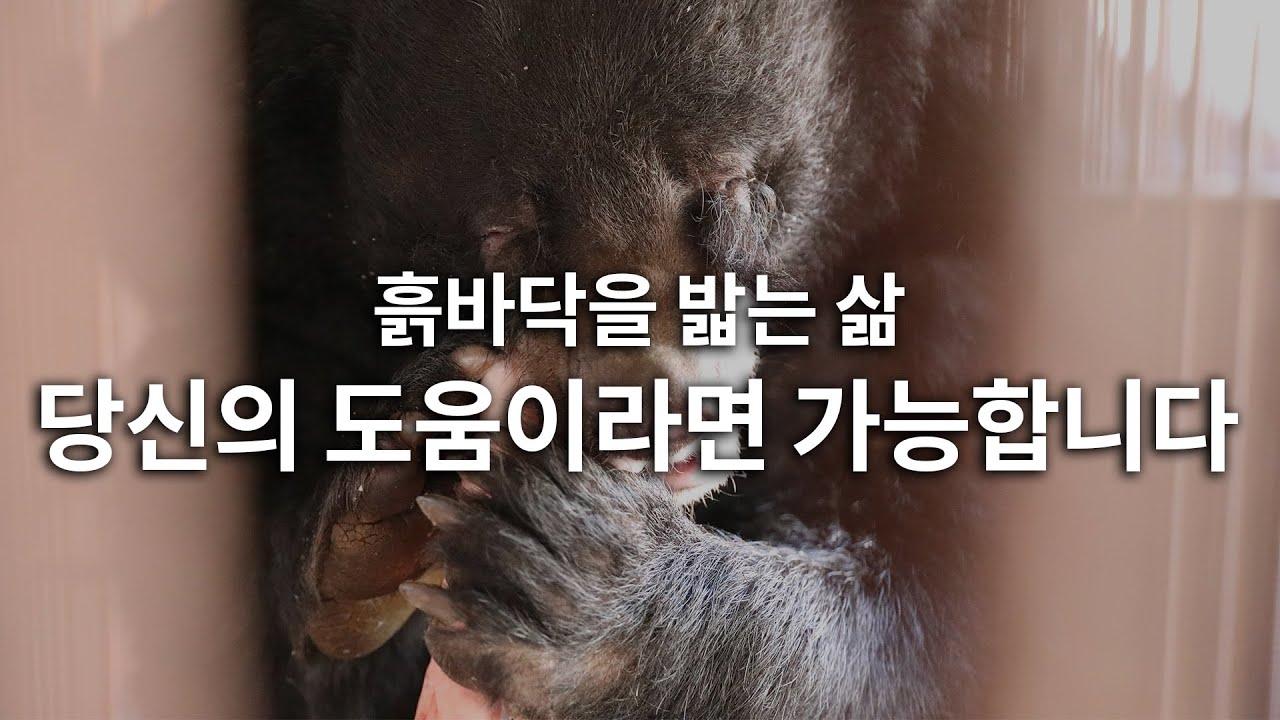 [사육곰] 흙바닥을 밟는 삶, 당신의 도움이라면 가능합니다. /동물자유연대