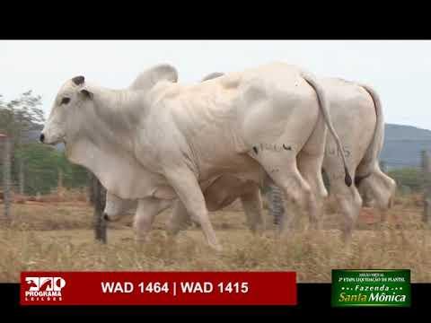 LOTE 67 - WAD 1464 | WAD 1415